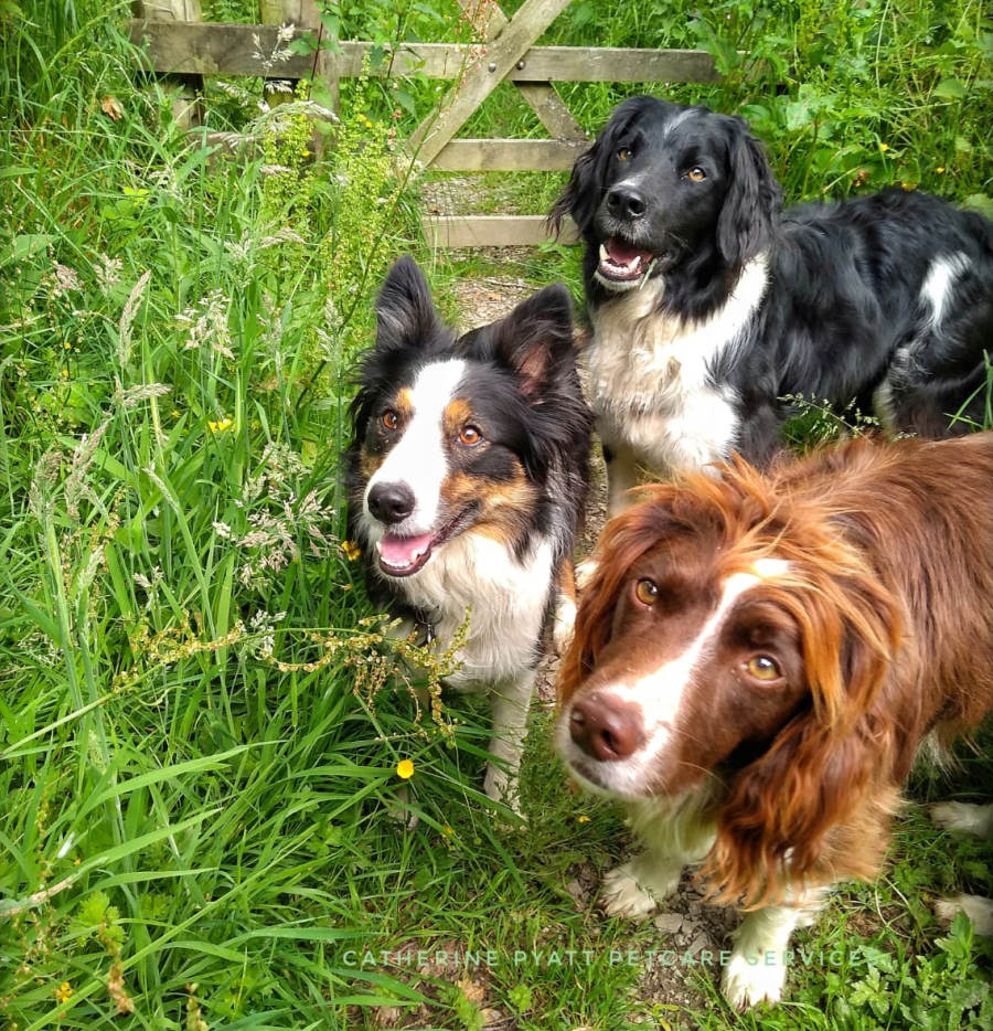 Cockermouth dog walkers